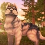 狼传说家园与爱心无限钻石版