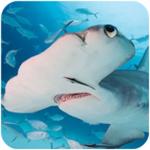锤头鲨模拟器游戏安卓版